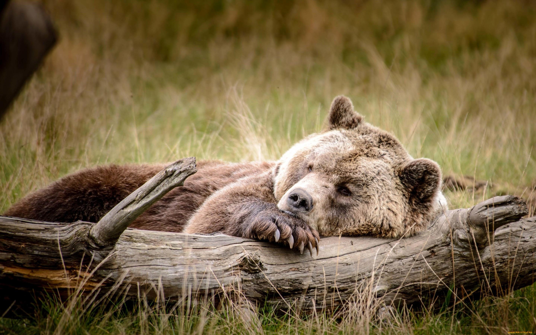 Лучшие картинки про природу и животных способ